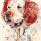 Adler, Clumber Spaniel, Colour Splash