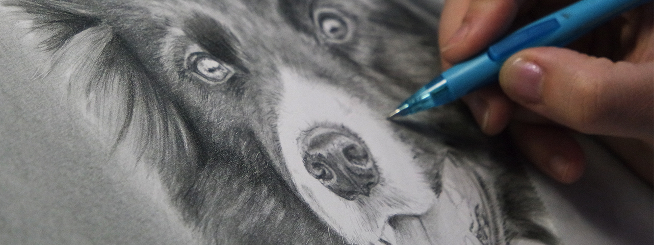 Graphite portrait of a border collie